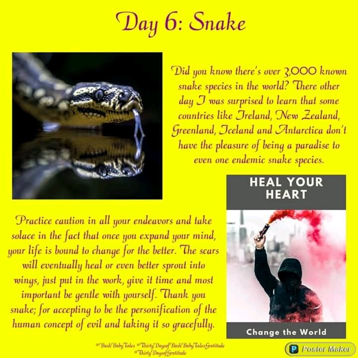 Thirty days of #BushBabyTales gratitude! ❤❤❤  https://t.co/kMWxge9EDb  #Snake #Gratitude #ThirtyDaysofBushBabyTalesGratitude #ThirtyDaysofGratitude #Africa #Love #Mother #Woman #Man #Nature #Animal #Plant #Earth #Universe #SpiritAnimal https://t.co/oed63rioKh