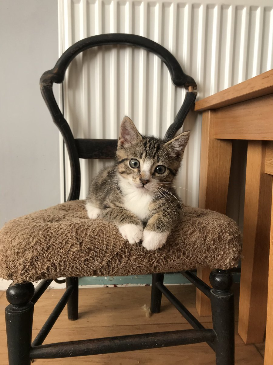 Hello furriends, I'm on my throne watching those weird hoomans doing whatever it is that hoomans do. Do you think I'm still a cutie? #CatsOfTwitter pic.twitter.com/JZANNaUmf2