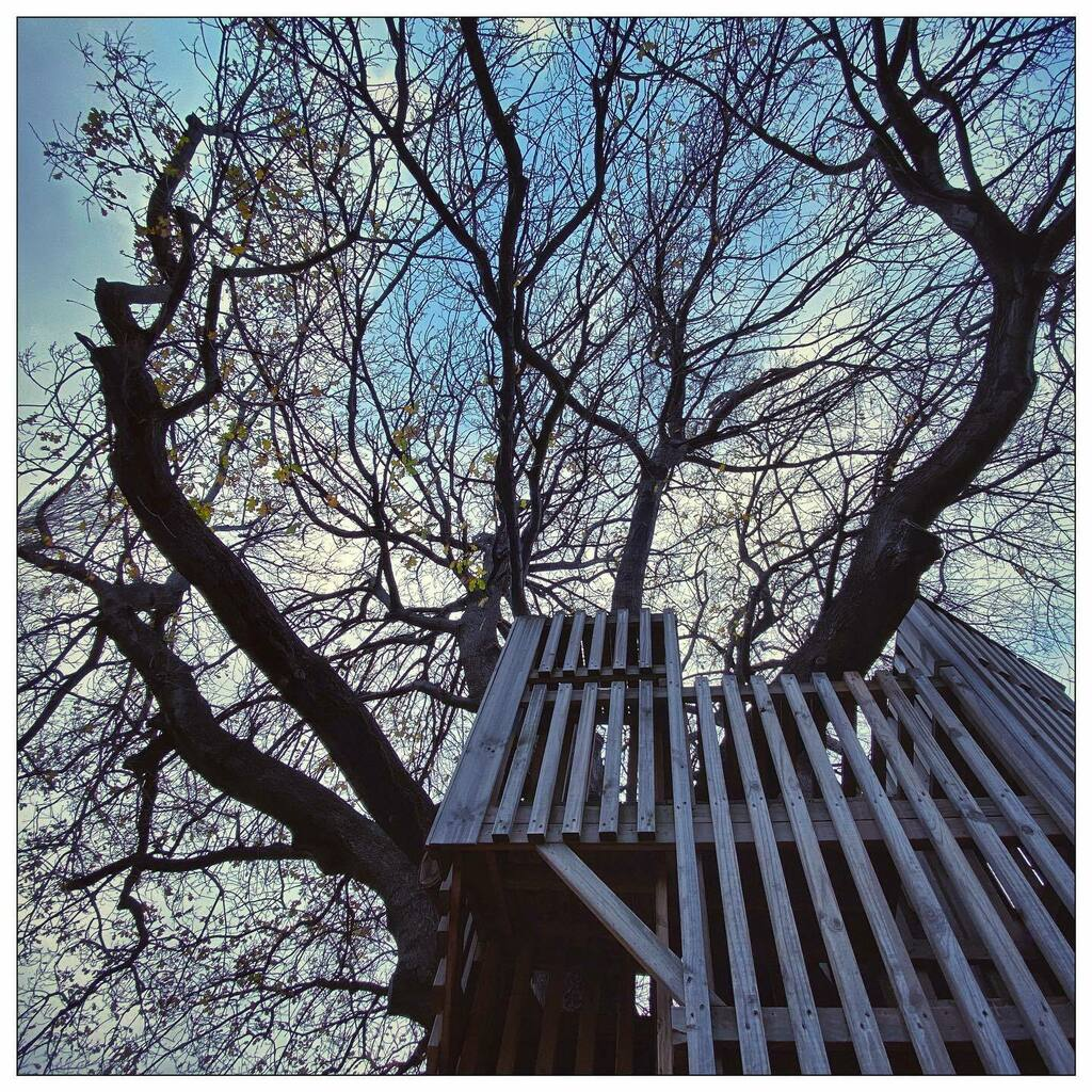 #treehouse & #tree #branches #silhouette #winter #Hobart #Tasmania #photooftheday #iphoneonly