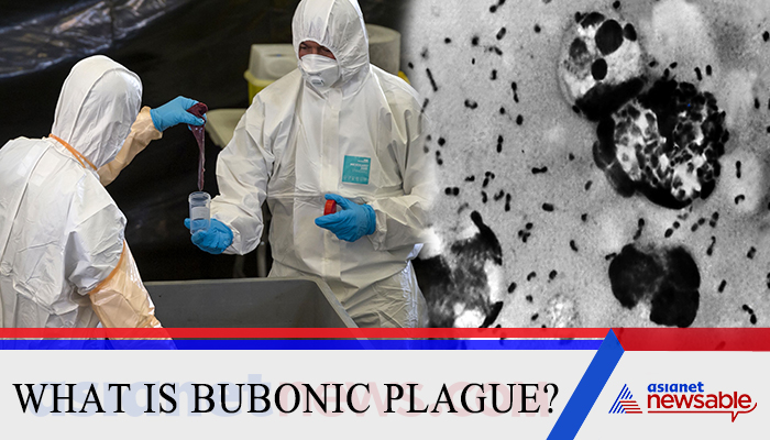 Chinese authorities have issued a warning about the #bubonicplague after a suspected case was reported at a Mongolian hospital. But what is the Bubonic Plague aka Black Death?