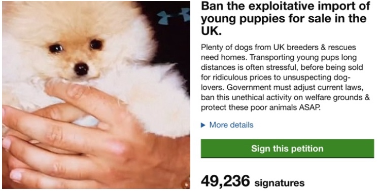 OVER 49K SIGNATURES IN FIRST 8 DAYS! Thanks to every animal-lover thats signed & shared this important petition. Tragically Mr Chai (pic) only survived in UK for 6 days. You can help this reach 100K & prevent cruelty to other dogs here: petition.parliament.uk/petitions/3262… #BanPuppyImports