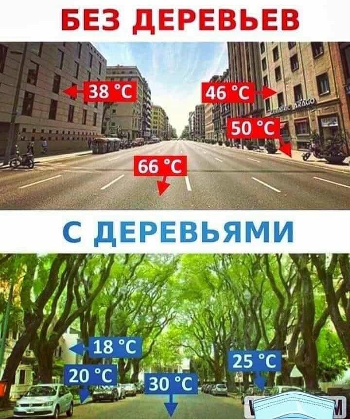 Сохраним деревья - это прохлада, жизнь, птицы! #экология #Бишкек #management pic.twitter.com/TZJzQ8ujCk