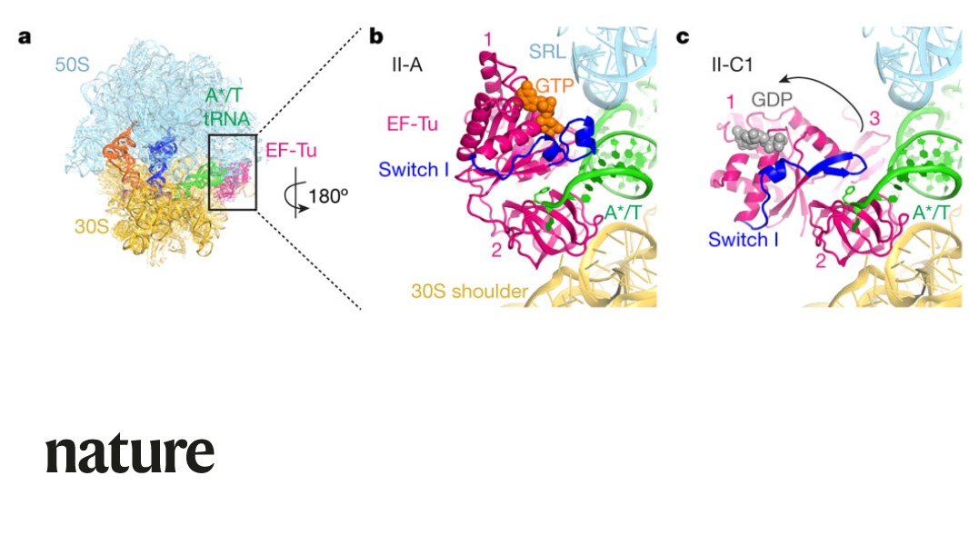 A study in Nature provides cryoEM structures of dozens of states during decoding and proofreading by the ribosome. https://t.co/A8iweJH5bV https://t.co/fjuJIdV6Oq