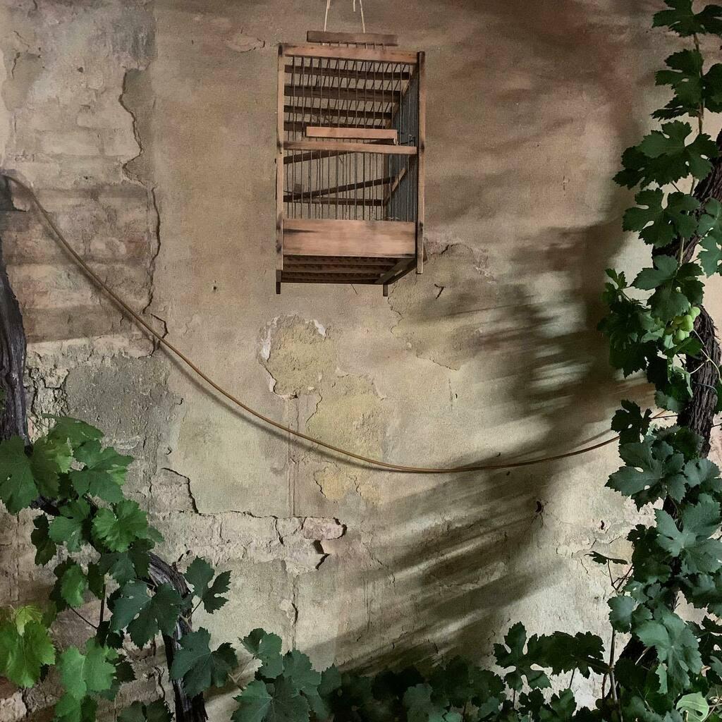 Flying free. #cage #vintage #rural #oldtown #interiordesign #restaurant #details #flyingfree #wall #climbingplant #shotoniphone #igersitalia #igersemiliaromagna #igersbologna https://instagr.am/p/CCS89Z1qceU/pic.twitter.com/nM6kggsQKs