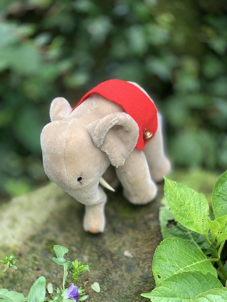 Steiff Vintage week 💕 Our Steiff Vintage Animals are made between 1950/1960. They are all in great condition but not all of them have the Steiff button and label still attached #steiff #steiffelephant #steiffanimals #elephant #collectibles #mondaymood #steiffvintage #steiffbears https://t.co/kvr236Uv0d