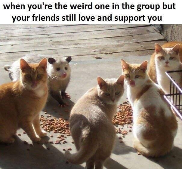 Replying to @Coopers_mews: Diversity adds.     Meow.