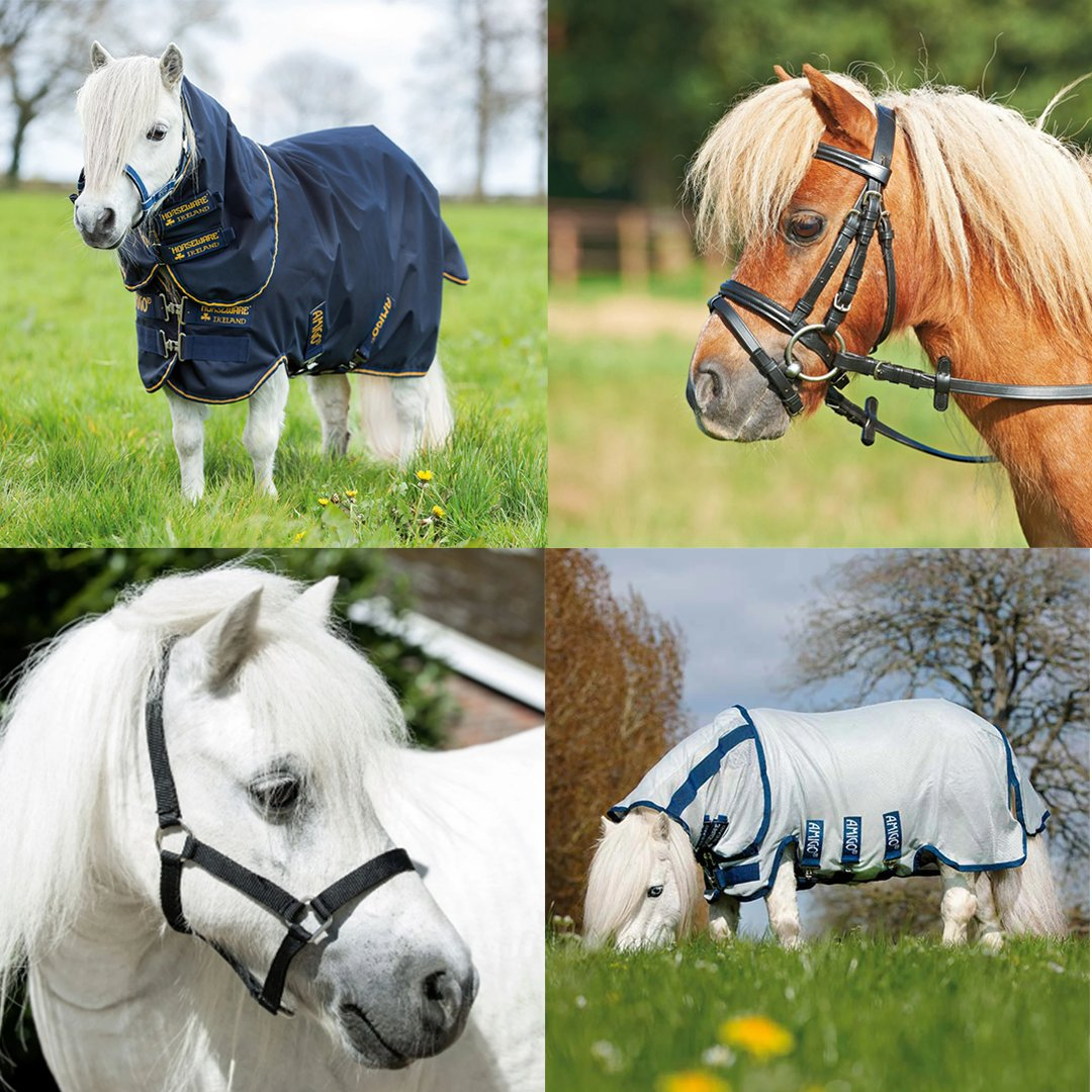 Do you have a Shetland that you struggle to find tack and accessories for? Our Shetland Collection has a great array of products that are both stylish and practical for your miniature four-legged friend.  Shop Now – https://www.equus.co.uk/collections/the-shetland-pony-collection-home …  #equus #equusengland #shetlandpony pic.twitter.com/RZedP8Dfe3