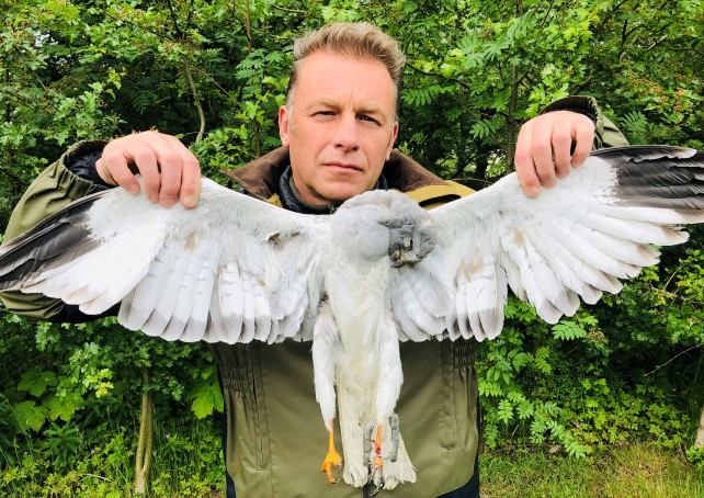 Last yr this poor hen harrier was found with an almost severed leg caught in barbaric & illegally-set trap on Leadhills Estate. No prosecution but a 3yr Gen Licence restriction was imposed. Now the estate has been given an individual licence. #NoDeterrent …ptorpersecutionscotland.wordpress.com/2020/07/06/lea…