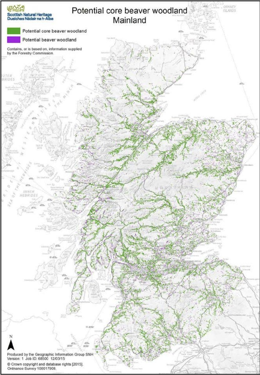A report by @nature_scot found over 105,500ha of suitable habitat; so lets help these flood mitigating, drought reducing, biodiversity enhancing, water filtering ecosystem engineers get to work in a time of climate & biodiversity emergencies, whilst helping avoid conflict areas.