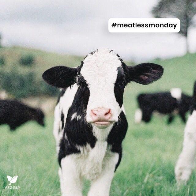 Tag a friend who needs to start Meatless Monday! 💚🌱 . . . . #crush #vegan #crueltyfree #dating #vegetarian #vegandating #match #vegansingles #meatless #plantbased #govegan #meatlessmonday https://t.co/f9nFRGDzao