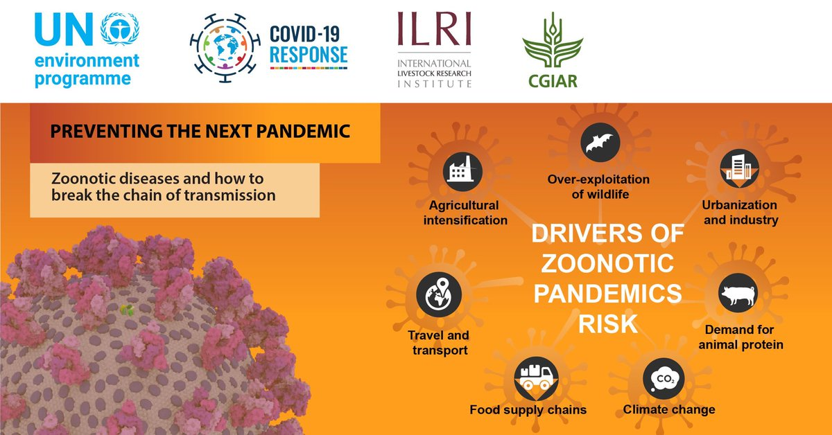Rise in zoonotic diseases are caused by: 🥩Increased demand for meat products 🌱Unsustainable farming 🐯Exploitation of wildlife 🔥Climate crisis New @UNEP & @ILRI report has steps governments can take to prevent future pandemics like #COVID19. bit.ly/3iztAd3