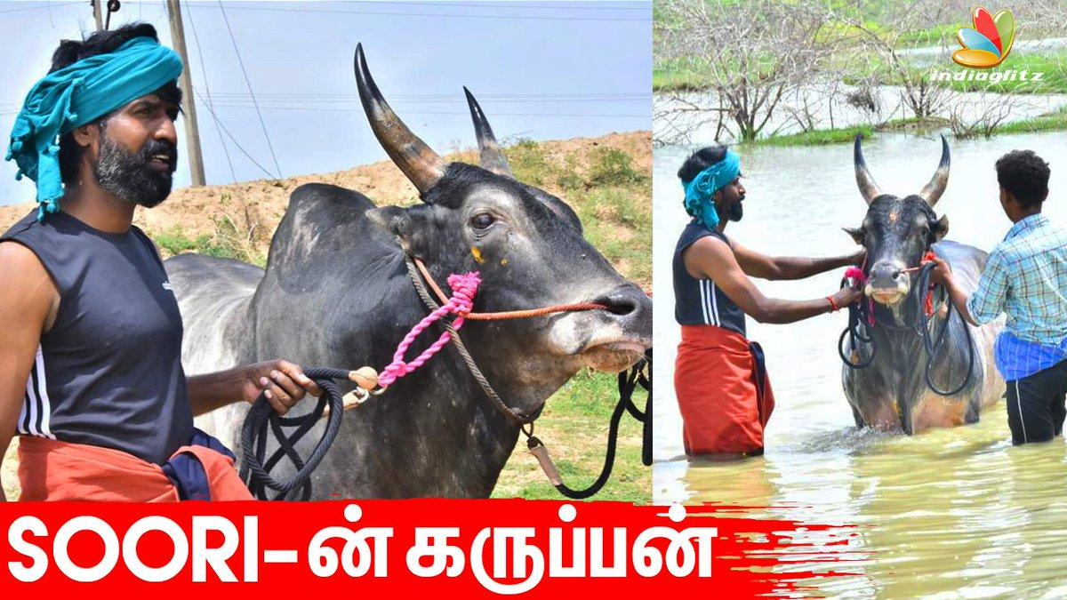 ஊரடங்கில் Gethu-காட்டும் Soori  #Jallikattu #Kaalai #Madurai #lockdown #karuppan #LOCKDOWNDIARIES #lockdownextension #Thalaivar #ThalaivarRajinikanth #Thalaivar168 #soori #Annaatthe   Watch: https://youtu.be/cB8hATvoFbApic.twitter.com/kA6O4SQWAq