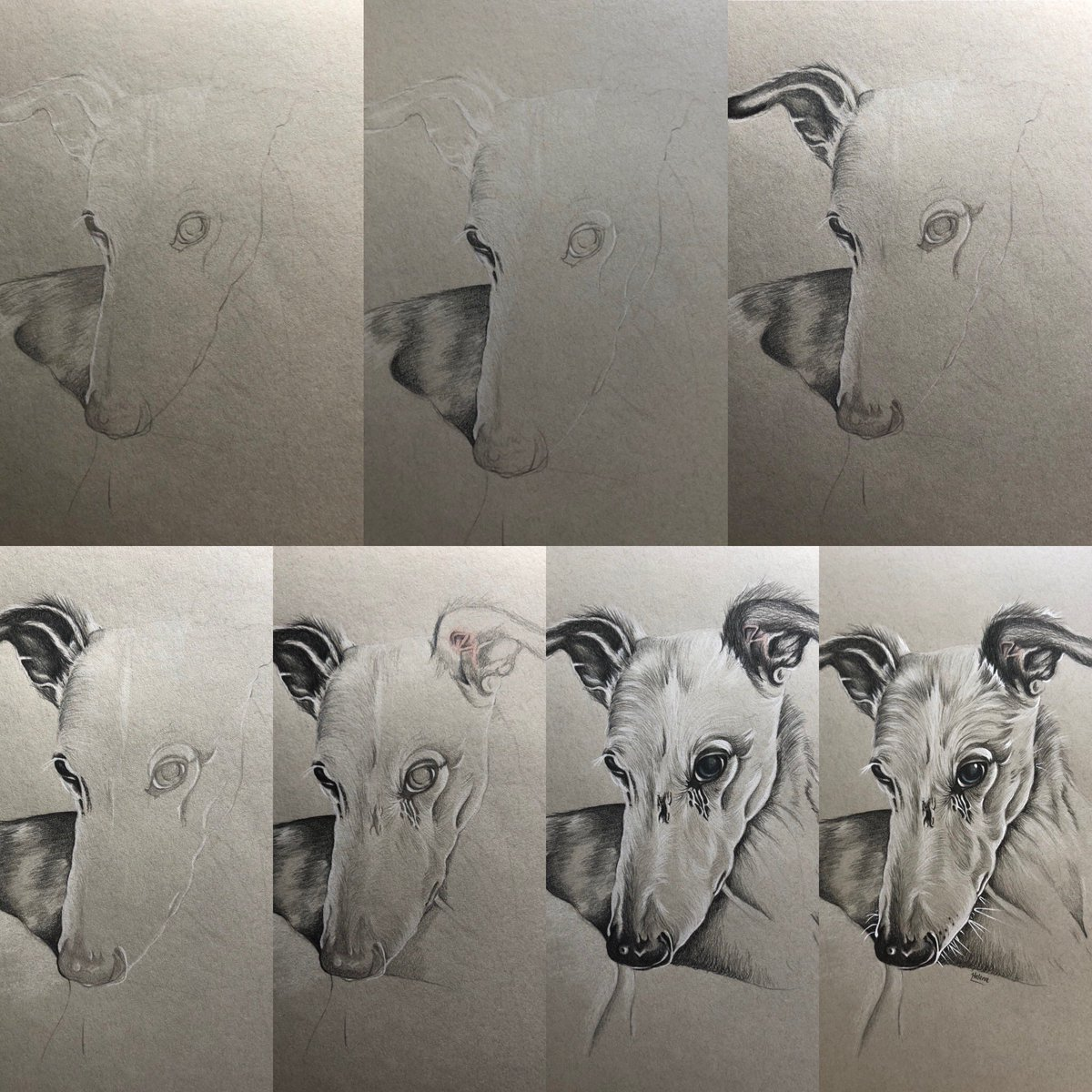 Progress pics of beautiful Bernard, a commission I did the end of last month, at some point I will video the whole process. #dogs #dogportraits #greyhound #whippet #pets #petportraits #commission #art #artist #weloveanimals #handdrawn https://t.co/P5PC1O26EV
