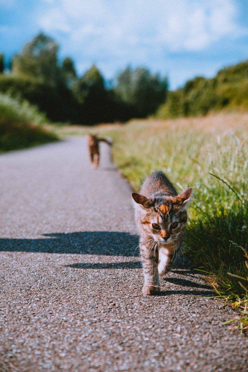 My #Kittens are doing a little #Race! #Mushi has taken the #Lead!   #Cats #Cat #Kittens #Kitten #Kitty #Pets #Pet #Meow #Moe #CuteCats #CuteCat #CuteKittens #CuteKitten #MeowMoe    https://t.co/6Gs8TL4ov4 https://t.co/2VBQ4HLFuo