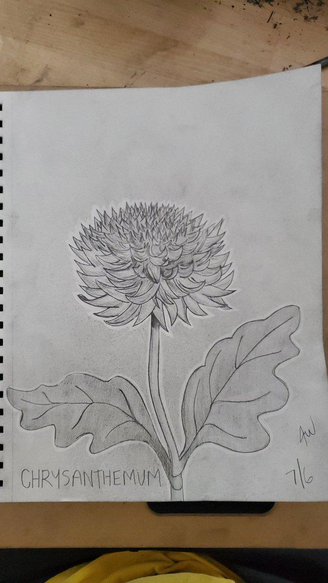 Flower of the Day  Day 5: Chrysanthemum  ❤️ #Flowers  #FlowerPower  #practice  #drawingtutorial https://t.co/6TUkt9MaGu
