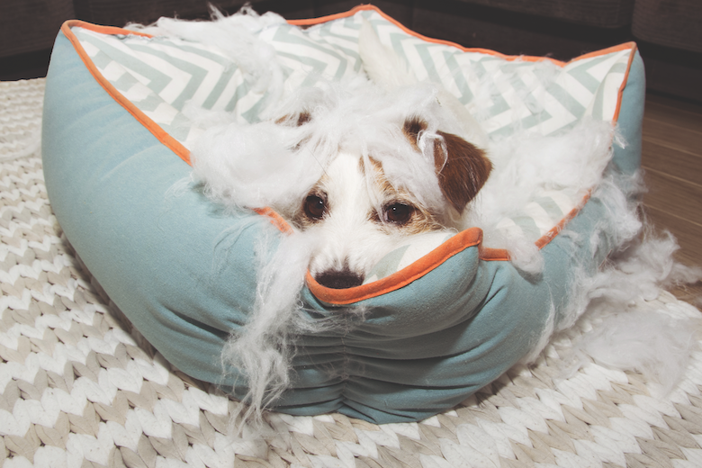How to Survive a Puppy https://t.co/pAYQZifT0N #dog #puppy #pup #cute #pet #pets #animal #animals #photooftheday #ilovemydog #dogoftheday #lovedogs #lovepuppies #doglover #doggy https://t.co/FMmB9WYZOG