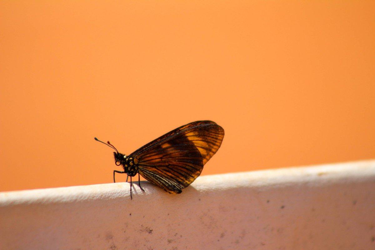 #inseto #insect #bug #fotografia #photography #fotografias #fauna #natureza #natura #nature https://t.co/pGJo1Un97g