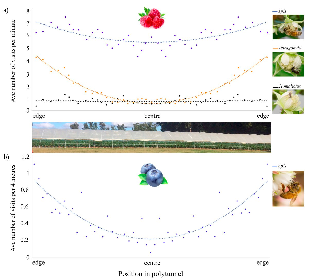 RT @TheBeeEcologist: Recent paper on where stingless and solitary bees and honeybees will forage in polytunnels. We found fewer visits in the middle of tunnels, corresponding with changed climatic conditions. https://t.co/9oSSIo0zhb https://t.co/nwfUH2hojg