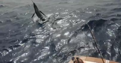 Grand Canary - Corali went 1-2 on Blue Marlin (500).