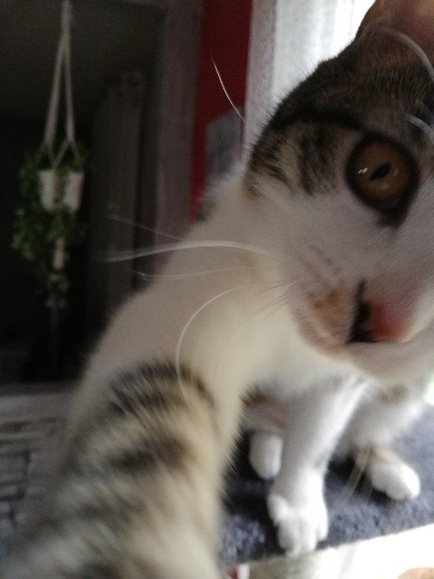 Selfie cat #cats #selfies pic.twitter.com/xmOblzMlE1
