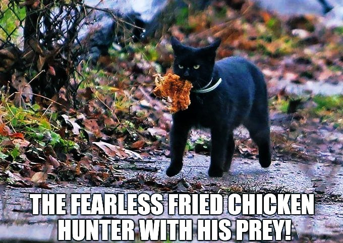 When humans won't get us what we ask for, enterprising felines take matters into our own paws... #NationalFriedChickenDay https://t.co/CBNWM5RxWC