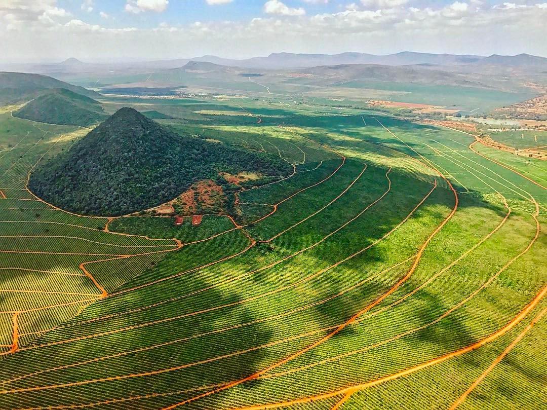 Teita Sisal Estate in Taita-Taveta County, Kenya is the single largest sisal estate in the world. Photo credit: @JasonCollette11.
