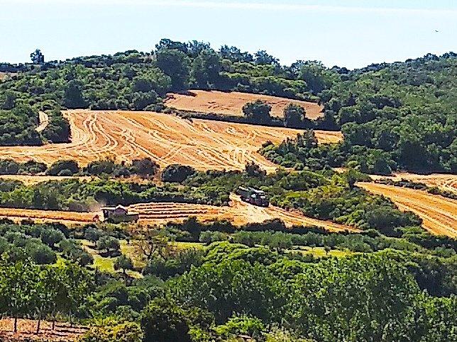 """Las cosechadoras  """"peinan"""" los campos de cereal. #Lacosecha #arandigoyennavarra  #Valle_de_Yerri #TierraEstella  #Navarra #Spain  #Europe #Navarrapics https://t.co/HUmThw5FkY"""