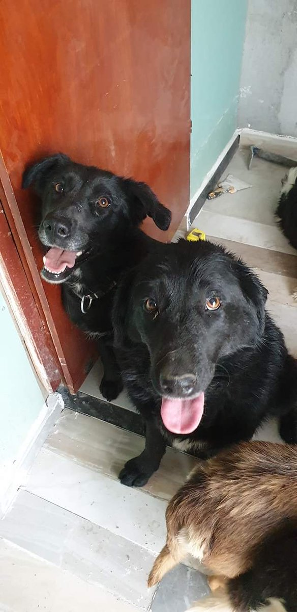 #Nanazi and #Maya are best friends  They want to tell you that forgiveness is key to a long and healthy friendship. #AMOS #AMOSShelter #shelterdogs #bestfriends #dogfriendship #friendship #animalrescuepic.twitter.com/zEwizVQ4sQ