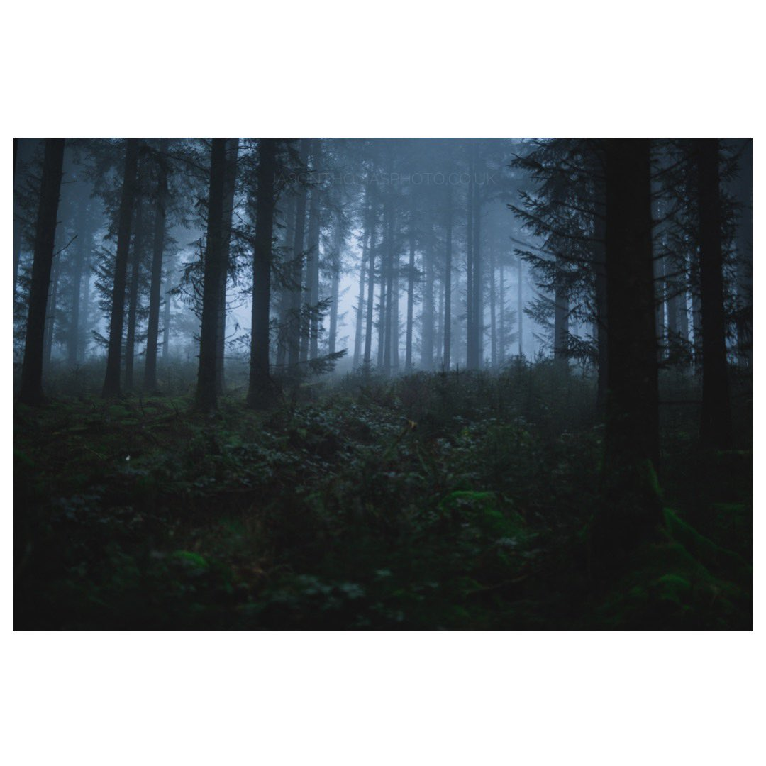 This eerie forest reminds me of something in a horror movie. Pembrokeshire - Wales  #Documentary #wales #Sony #SaveTheArts #SaveTheArtsUK #ActNow #eerie #findyourepic #wayoflife #thisaintartschool #countryfile #photography #photooftheday #photo #photooftheday #WexMondays https://t.co/mCXpxeew3R