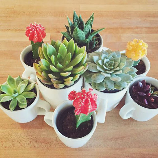 Puedes aprovechar tus ollas y tazas viejas para convertirlas en macetas. #MXdelFuturo verde https://t.co/zyE9RJAnGi