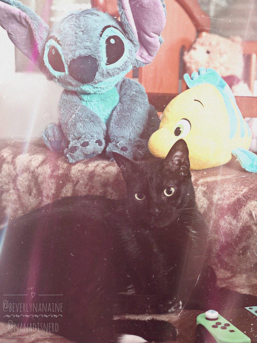 Ayer fue el 2º aniversario desde que Mittens llegó a casa. 2 años más viejo y 5'5 kg más grande. ・・・ 📸 IG: https://t.co/FiinSV6Ioi ・・・ #Mittens #MittensVanDerSalem #BeverlyNana #BeverlyNANAine #NanaDisnerd #Cat #BlackCat #Disney https://t.co/XGp4pvszy1