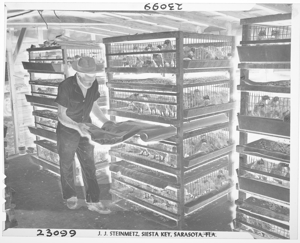 Untitled (man cleaning a chicken coop, Jacksonville, FL), Joseph Janney Steinmetz, 1947 https://www.harvardartmuseums.org/collections/object/137047… #museumarchive #harvardartmuseumspic.twitter.com/FN54Rmilw5