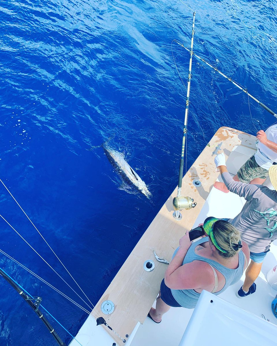 Oregon Inlet, NC - Skirt Chaser released a Blue Marlin and a Sailfish.
