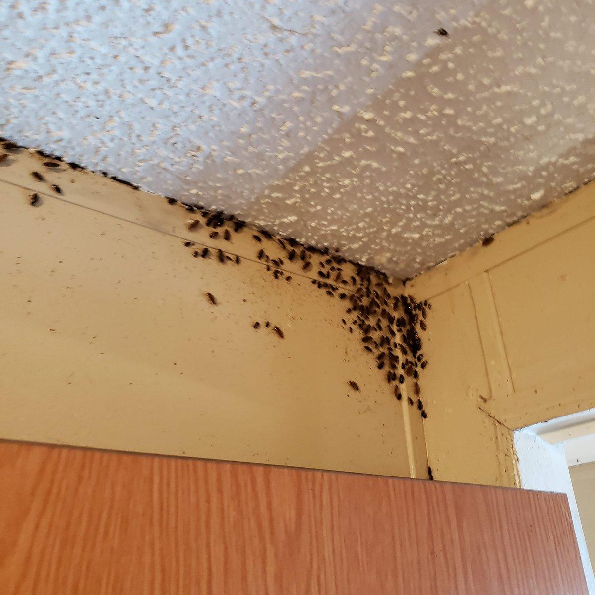 Superior Termite And Pest Control Superiorcontrol Twitter