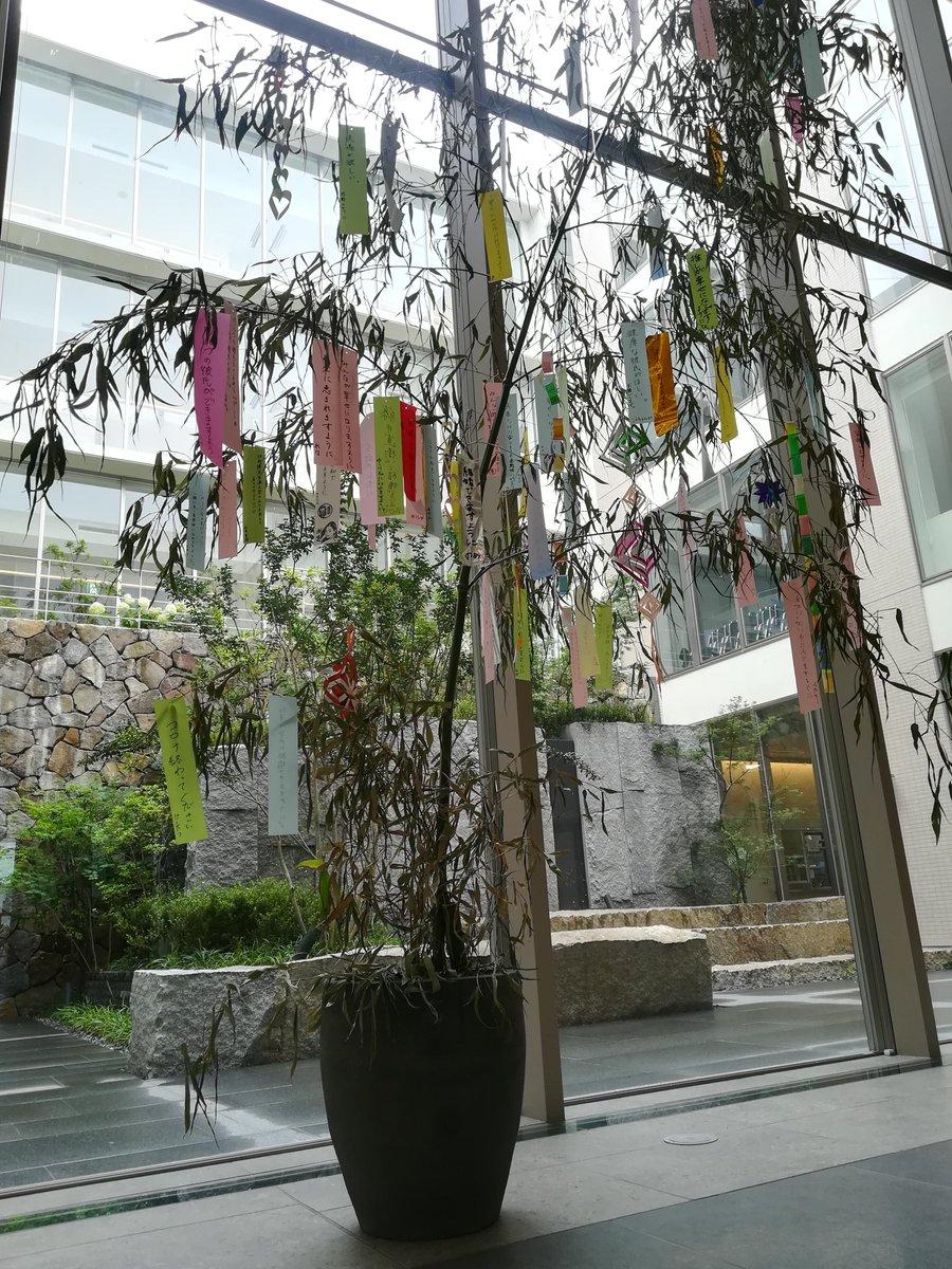 鎌倉 医療 大学 湘南