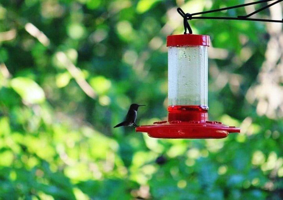 Thirsty #hummingbird of Illinois #birds 💦 🐦 #summer #summervibes #summer2020  #naturephotography #naturelovers #backyard  🐿🦌🦮🌿🌱🌾🦦🦡🦜🦃🕊🐇 🦅🦔🐰🐦🐧🦉🦇🐝🐞🕸 #birdsofinstagram #feeder #birdstagram #birds_nature #birdphotography https://t.co/TIlHt7wlVK