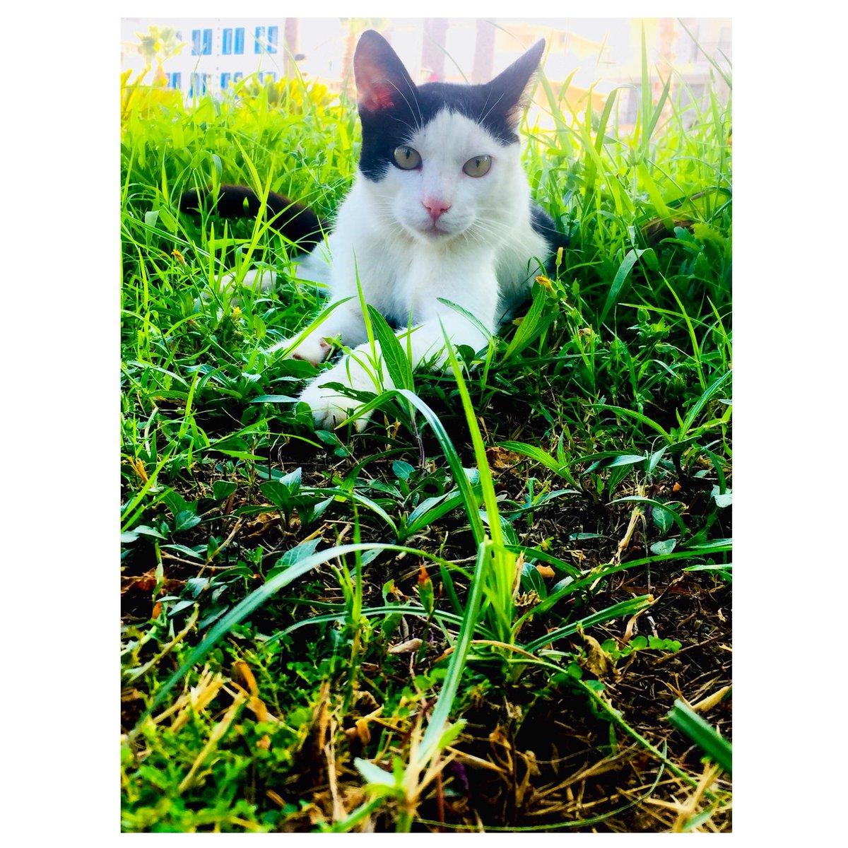 """Günaydın ☀️  """"Minicik bir kedi yavrusu bir sanat şaheseridir"""".🐈 #leonardodavinci  . . . . . . . #günaydın #salı #kedi #kediler #kedilerindünyası #kedicikler #kediseverler #mutluluk #cat  #TagsForLikes #catsagram #catstagram #instagood #kitten #kitty #pet #animal #animals"""