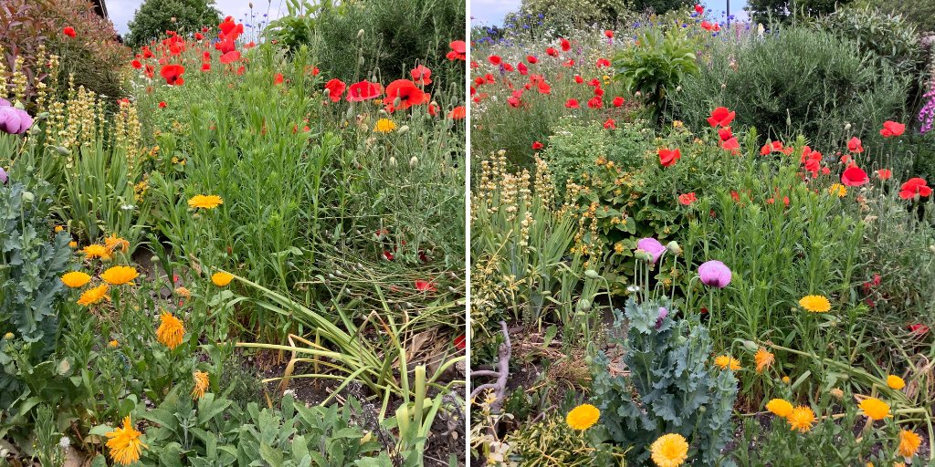 🌼In 2018 volunteers across the region spread wildflower seeds in station gardens. Lockdown has allowed these flowers to grow and Mother Nature to take over. These pictures at Driffield station show an array of wildflowers which are keeping bees and other insects very happy.🌼 https://t.co/TpSNkwJ0QE