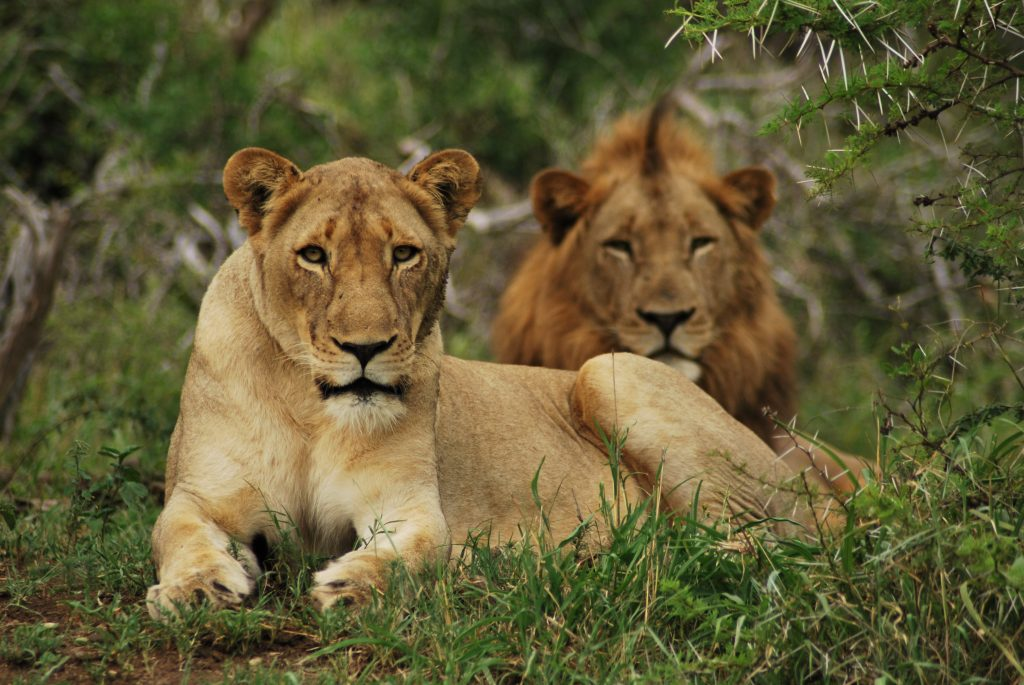 Youth pressure SA Government to phase out captive predator breeding industry - https://t.co/gVmqyuWTqm https://t.co/vNG4GE75aX