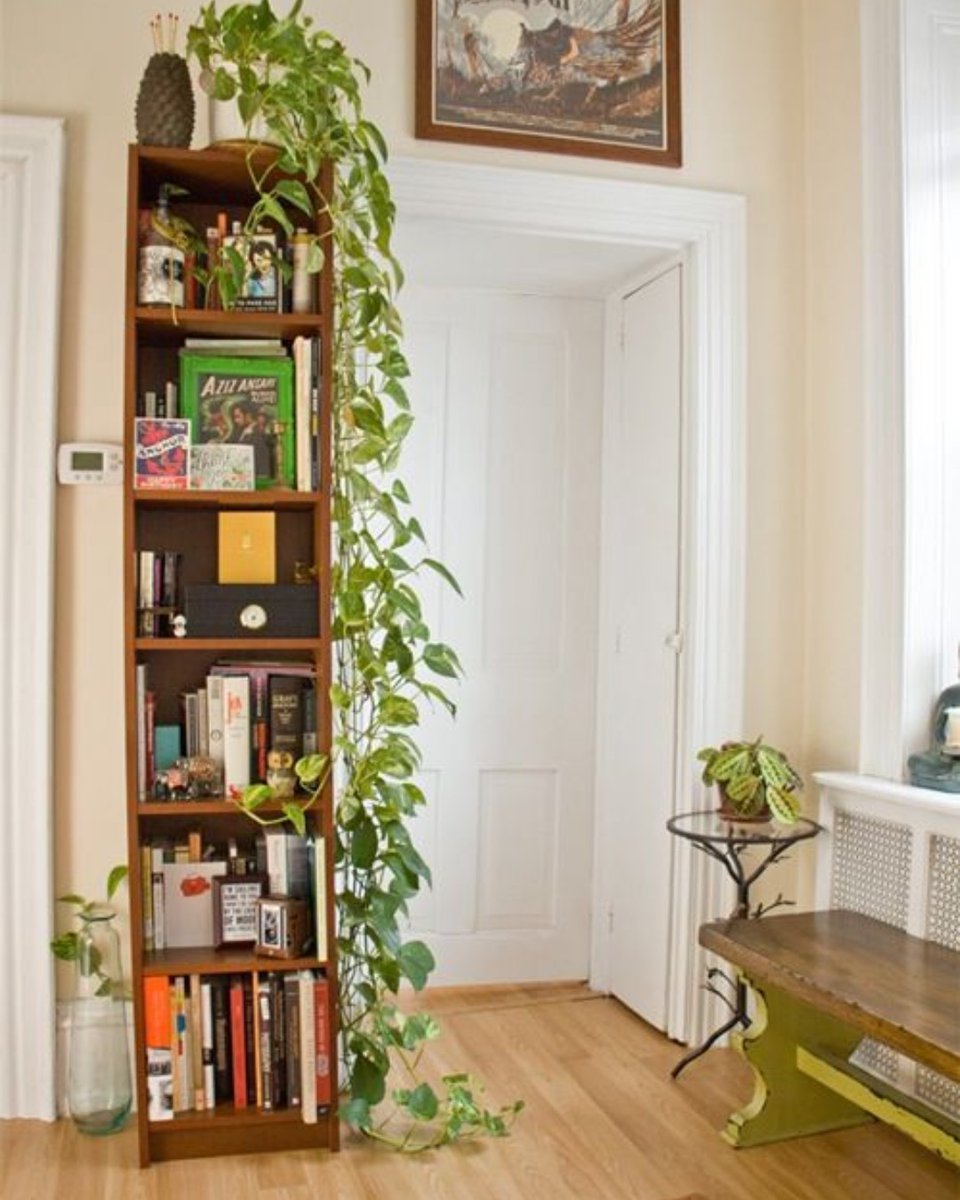 The Unexpected Reason to Add Plants to Your Home.  #trend #fashion #trending #style #moda #love #instagram #follow #like #viral #instagood #trendy #tiktok #k #ootd #instafashion #look #likeforlikes #beauty #explore #model #explorepage #new #shopping #photography #design #bhfyp