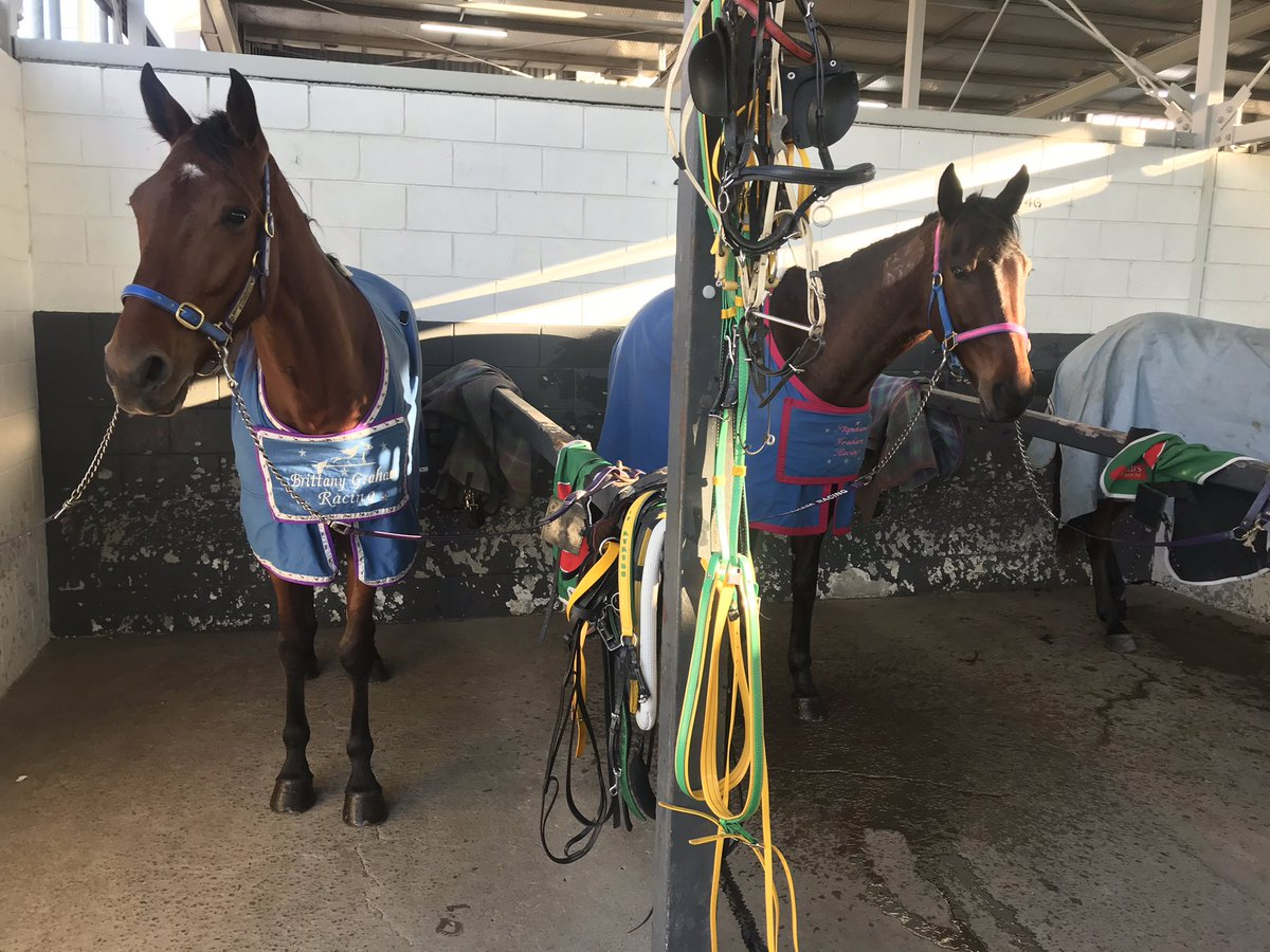 Runners for today's Albion Park meeting  Race 7 #6 4.57pm - Blue Moon Rising Race 8 #6 5.30pm - Montana Chief  Tough draws for the boys today.pic.twitter.com/BGkRdKF81N