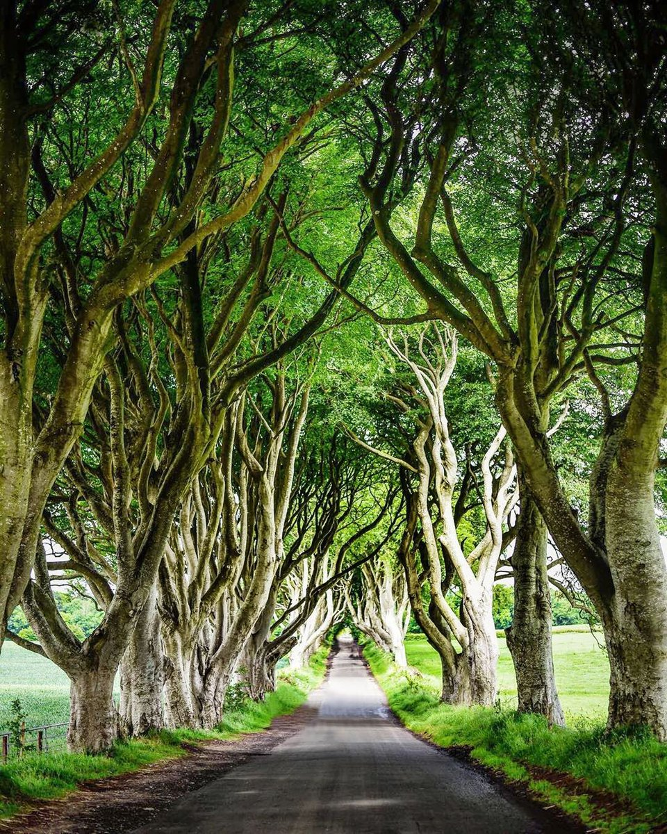 Planted over 200 years ago, the row of intertwined beeches lines an out-of-the-way country lane in Ballymoney. Look familiar? This tree tunnel, also known as The Dark Hedges, was featured in #GameofThrones, think you know when? Let us know! https://t.co/qZ25YkJLJb