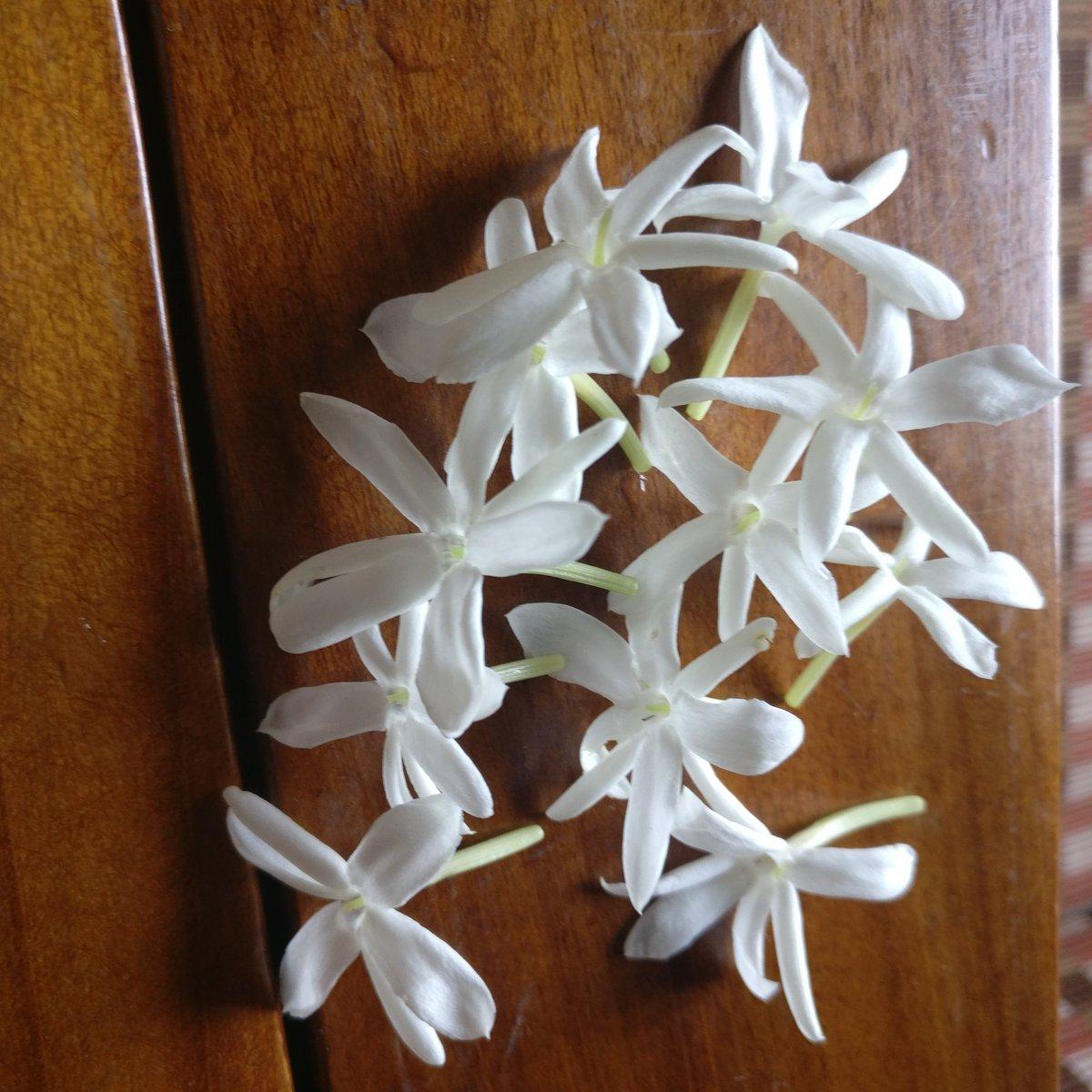 God's perfumerie Nature's Blessings #Monsoon2020 #flowers #villagelife #gardening #Nature @GardenLiveNow