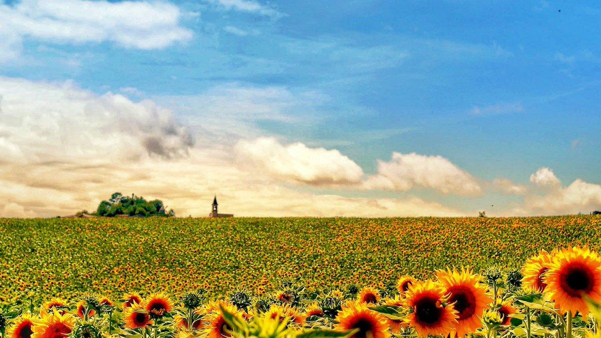 Là-haut sur la colline... il y a Lautrec 🌻🌿🌾 #lautrectourisme #lautrec #flowers #plantes #tarn #occitanie #visites #nature #ressourcement #plusbeauxvillagesdefrance #summer