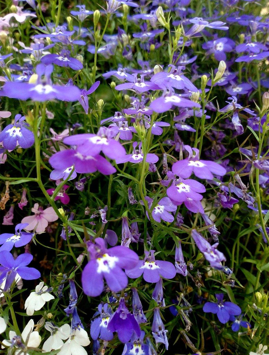IMG_20200706_123006 / Clickasnap  #Flowers #photos