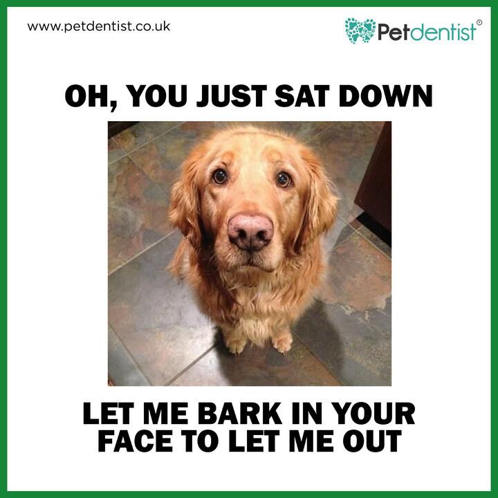 "Hit ""like"" if you know it the only way you'll ever listen to me! http://www.petdentist.co.uk . . . #petdentist #petmemesdaily #petmeme #dogmemesdaily #doggomeme #funnydogs #sillydogs #doggosbeingdoggos #memedog #dogsofinsta #dogstagram #lovedogs #dogslife #mydoggoisloudpic.twitter.com/ASTePeY5ox"