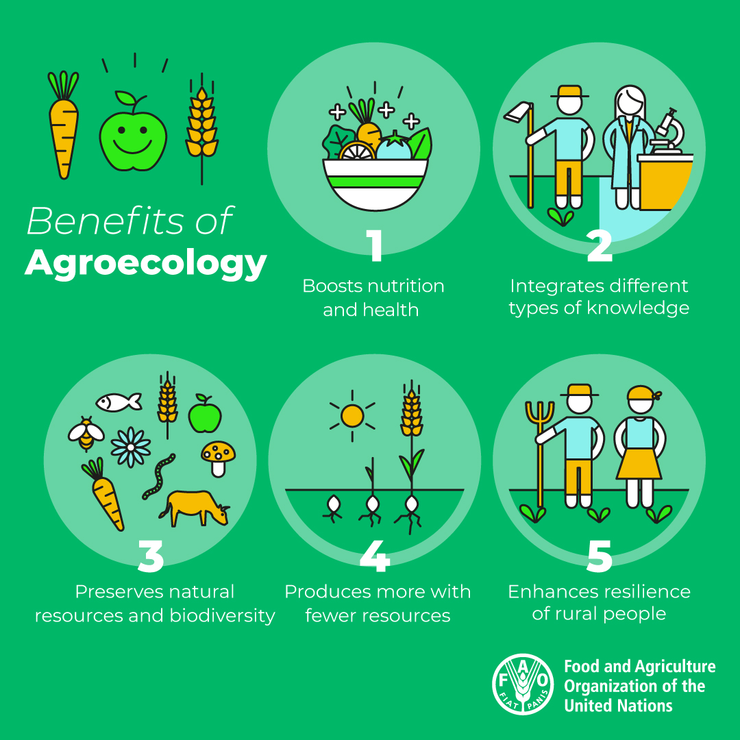 Agroecology can help 👇  🌱Build resilient livelihoods 🌱Safeguard biodiversity 🌱Boost nutrition 🌱Sustainably manage the planet's natural resources 🌱Respond to climate change  Learn how  👉https://t.co/8odTXOCIco https://t.co/oi8iyq8J3Q