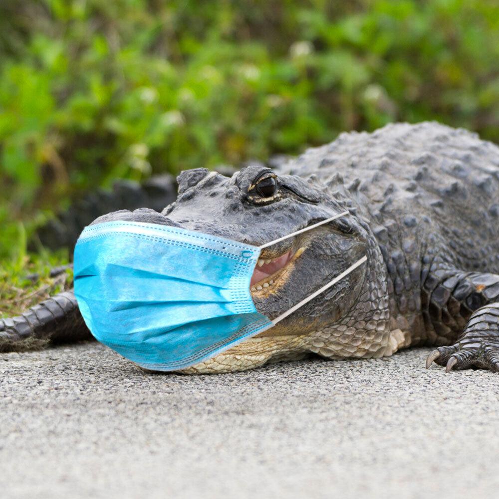 @UF #GatorsWearMasks ‼️ https://t.co/Uz336f87Hm