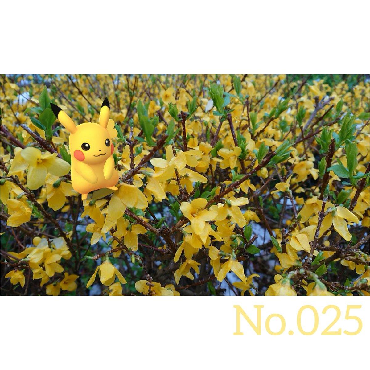 本日は七夕。いい感じのジラーチ写真が無かったので、くっっっそ昔のピカ様写真を載せておきます。 ……………………………………… #pokémongo #pokemongo #ポケモンGO  #GOsnapshot #NoFilter  025 #Pikachu #ピカチュウ https://t.co/3YkR8bUWV3