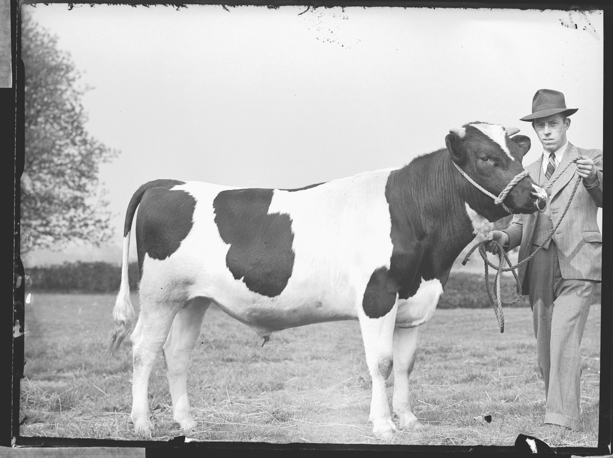 people talk about cool cats but what about cool cows https://t.co/3D1HozI4qE